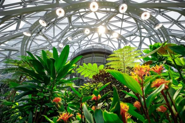 Is it an office, or is it a rainforest?
