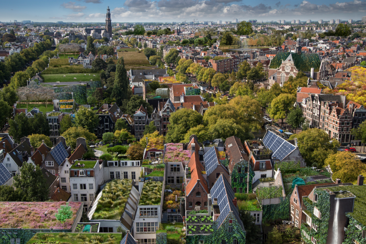 The blue-green roofs will be laid over a three-year period. Picture: Rooftop Revolution