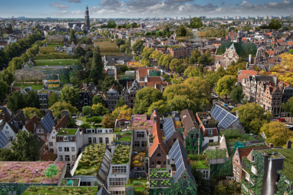 Amsterdam installs blue-green roofs