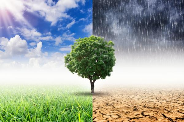 Survey reveals gap between climate change perceptions and required actions