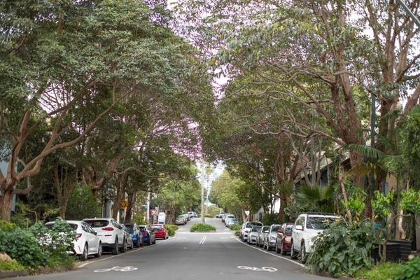 Sydney to plant 700 new street trees annually to green the city